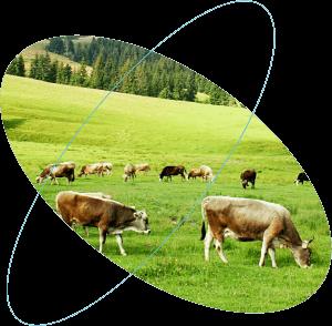 internet vecí, sigfox, poľnohospodárstvo